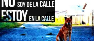 Hermosas imágenes para descargar de perros en el Día Internacional ... - animaleshoy.net