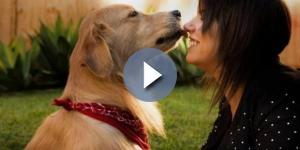 Pets também têm direito à um registro de guarda desde o seu nascimento. ( Foto: Google)