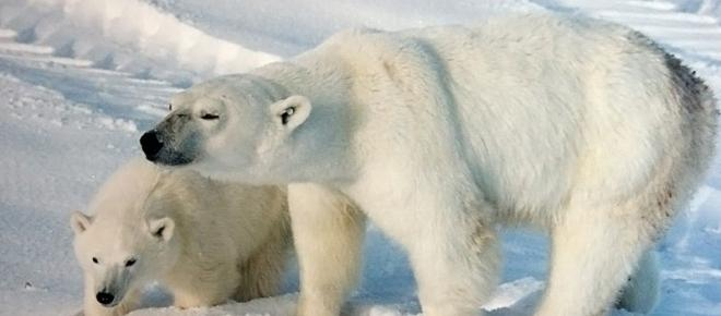 Melting of ice due to global warming sets the stage for Arctic tourism