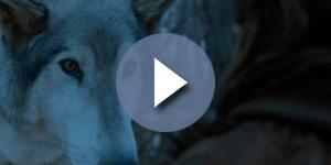 'Game of Thrones': Arya and Nymeria reunion. Screecap: GameofThrones via YouTube