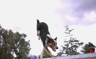 Vídeo: Jumpy, o cão que faz Parkour