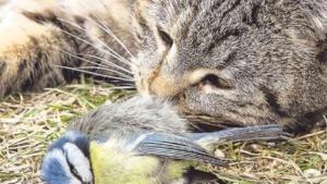 Video: Vogelarten von Katzen bedroht - Was nun?